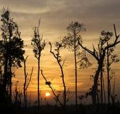 Árboles en el fondo de una puesta del sol hermosa en forma cuadrada Foto de archivo libre de regalías