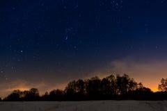 Árboles en el fondo del cielo estrellado de la noche Foto de archivo libre de regalías