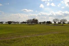 Árboles en el horizonte Imagenes de archivo