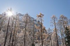 Árboles en el invierno Fotos de archivo