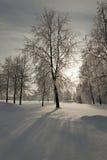 Árboles en el invierno Imagenes de archivo