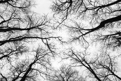 Árboles en el invierno Imagen de archivo libre de regalías