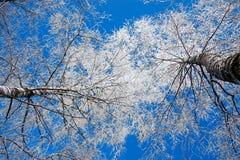 Árboles en el invierno cubierto con nieve Fotos de archivo