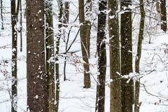 Árboles en el invierno cubierto en nieve Fotos de archivo libres de regalías