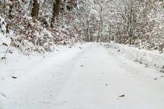 Árboles en el invierno cubierto en nieve Fotos de archivo