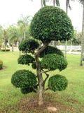 Árboles en el jardín Imagen de archivo