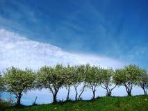 Árboles en el jardín Imagen de archivo libre de regalías