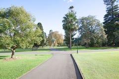 Árboles en el jardín botánico, Sydney, Australia Fotos de archivo