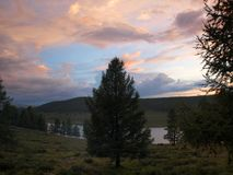 Árboles en el lago Fotos de archivo libres de regalías