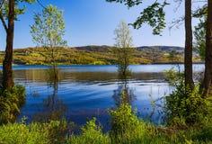 Árboles en el lago Imagenes de archivo