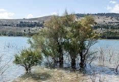 Árboles en el lago Foto de archivo libre de regalías