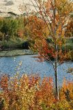 Árboles en el lago blanco de la arena Fotografía de archivo libre de regalías