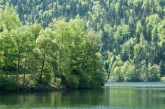 árboles en el lago de Kruth en la primavera en Alsacia - Francia Fotos de archivo