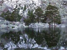 Árboles en el lago de la montaña Fotografía de archivo