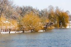 Árboles en el lago en invierno Fotos de archivo libres de regalías