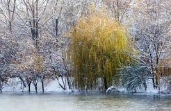 Árboles en el lago en invierno Imágenes de archivo libres de regalías