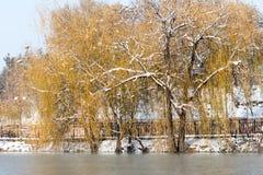 Árboles en el lago en invierno Foto de archivo