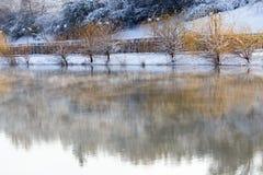 Árboles en el lago en invierno Foto de archivo libre de regalías