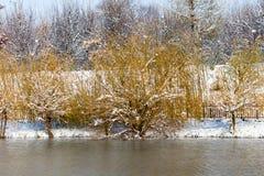 Árboles en el lago en invierno Fotografía de archivo