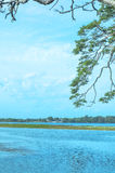 Árboles en el lago Tissa, Sri Lanka Fotografía de archivo