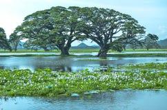 Árboles en el lago Tissa, Sri Lanka Imagen de archivo