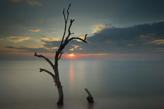 Árboles en el mar Fotos de archivo libres de regalías