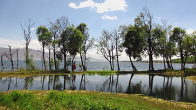 Árboles en el medio de ErHai Foto de archivo libre de regalías
