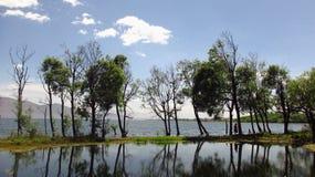 Árboles en el medio de ErHai Imagen de archivo libre de regalías