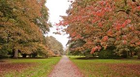 Árboles en el otoño Foto de archivo libre de regalías