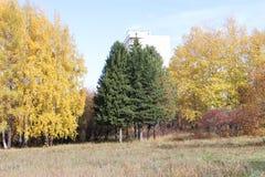 Árboles en el otoño Imagenes de archivo