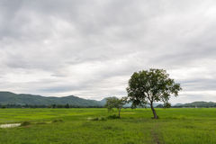 Árboles en el paisaje Imagen de archivo
