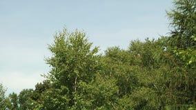 Árboles en el paisaje del bosque almacen de metraje de vídeo