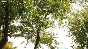 Árboles en el paisaje del bosque almacen de video