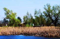 Árboles en el pantano con Khamis en el agua en Sunny Day Imágenes de archivo libres de regalías