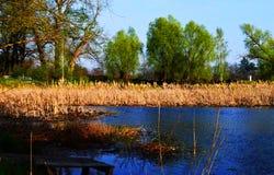 Árboles en el pantano con Khamis en el agua en Sunny Day Imagen de archivo libre de regalías