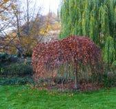Árboles en el parque Fotos de archivo