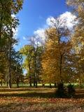 Árboles en el parque Imágenes de archivo libres de regalías