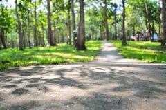Árboles en el parque Imagen de archivo libre de regalías