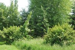 Árboles en el parque Fotografía de archivo