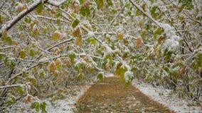Árboles en el parque bajo tiempo del otoño de la nieve Fotografía de archivo libre de regalías