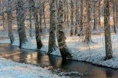 Árboles en el parque congelado Fotografía de archivo libre de regalías