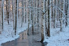 Árboles en el parque congelado Imagen de archivo libre de regalías