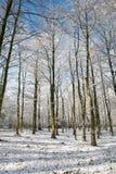 Árboles cubiertos con la nieve por una mañana soleada del invierno, Países Bajos foto de archivo