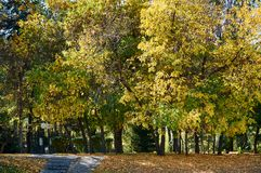 Árboles en el parque de la ciudad, Kazajistán fotos de archivo libres de regalías