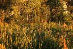 Árboles en el parque de la ciudad en la puesta del sol Imagenes de archivo