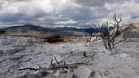 Árboles en el parque nacional de Yellowstone del géiser volcánico Imagenes de archivo