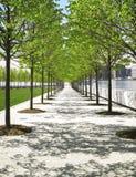 Árboles en el parque, New York City Imagenes de archivo