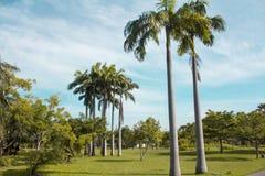 Árboles en el parque público Bangkok, Tailandia Foto de archivo libre de regalías