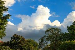 Árboles en el parque público con el cielo y las nubes Imagen de archivo