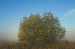 Árboles en el prado Fotografía de archivo libre de regalías